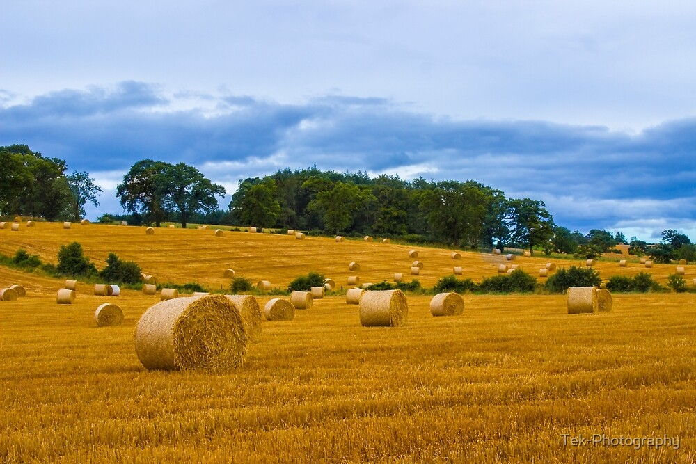 Countryside by Tek-Photography