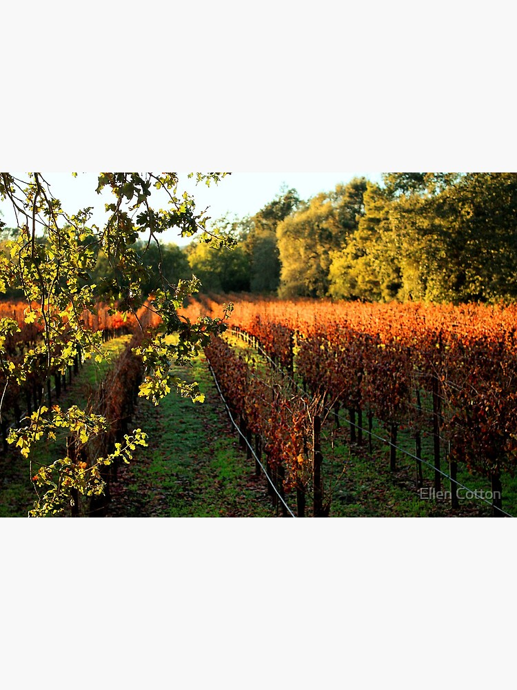 Late Autumn View of Napa Valley 2 by ellcot
