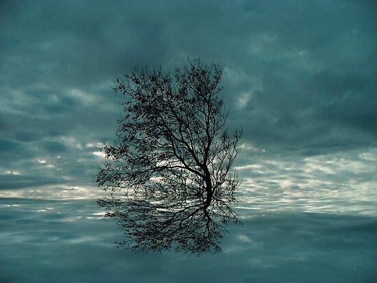 Windswept ! by Elfriede Fulda