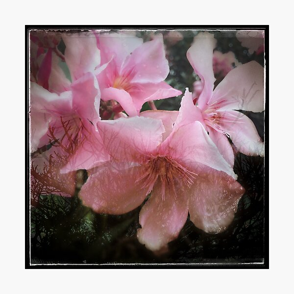 Pink flower and tree Photographic Print