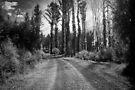Yellow Dog Road, Marysville  by Christine Wilson