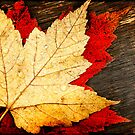 Red and Gold Leaves by Beth Mason