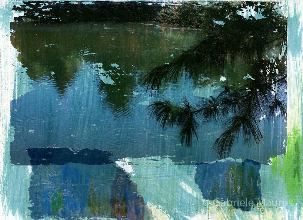 Pine over water. by Gabriele Maurus
