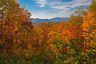 Autumn Blaze by photosbyflood