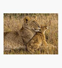 Lion Baby with Mother Photographic Print