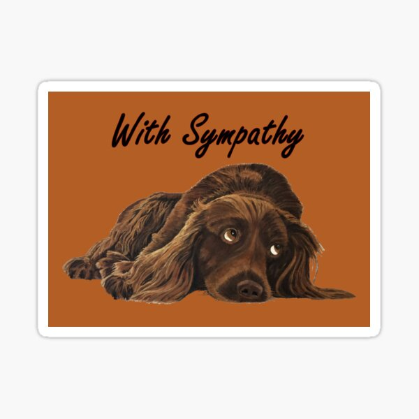 Appealing Spaniel - Sympathy Card Sticker
