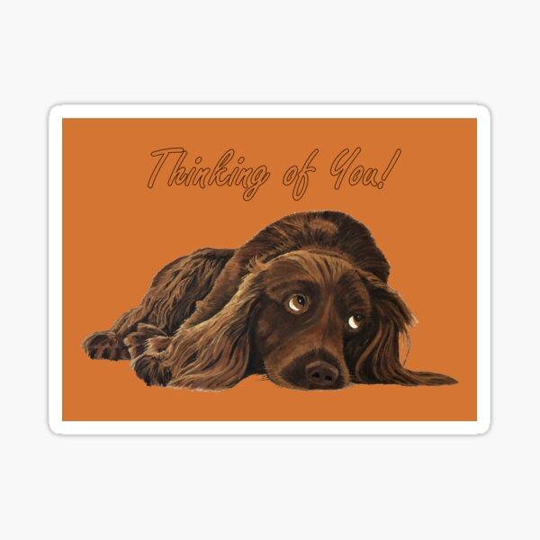 Appealing Spaniel - Thinking of You Card Sticker