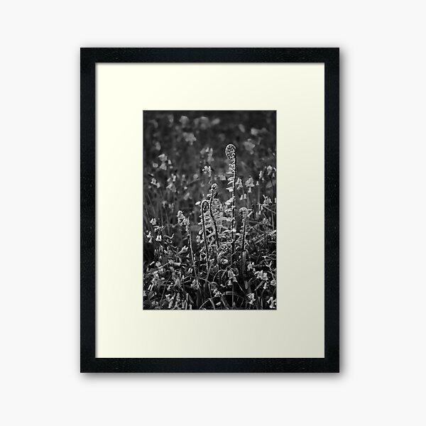 Fiddleheads 02 Framed Art Print