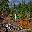 Fall In The McKenzie Lava Beds by Charles & Patricia   Harkins ~ Picture Oregon