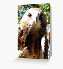 Swainsons Hawk Greeting Card