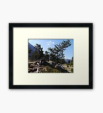 Timber Wolf... Framed Print