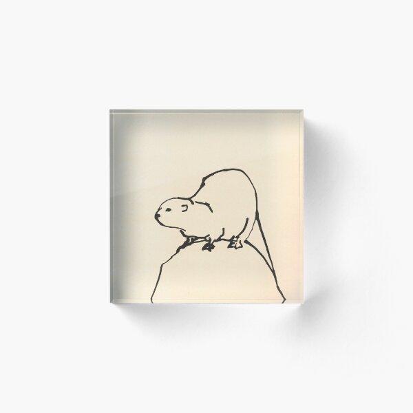 Otter on a rock by Sophie Neville Acrylic Block