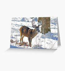 Winter Forage Greeting Card