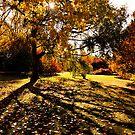 Cambridge Autumn by Pat Shawyer