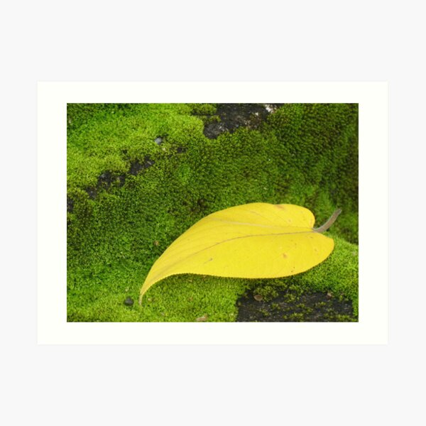 Fall on a Bed of Moss Art Print