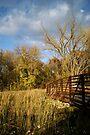Late Day Autumn Sun at the Bridge by Robin Clifton