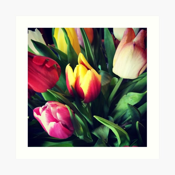 Tulips -  Art Print