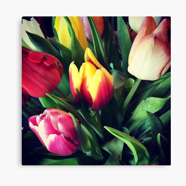 Tulips -  Canvas Print