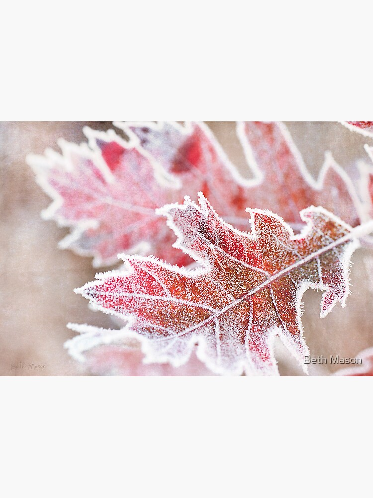 First Frost by BethMason