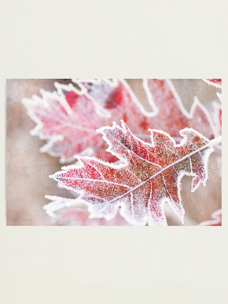 Alternate view of First Frost Photographic Print