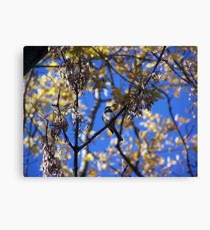 Bird Collection 001 Canvas Print