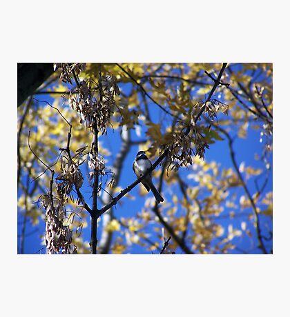 Bird Collection 001 Photographic Print