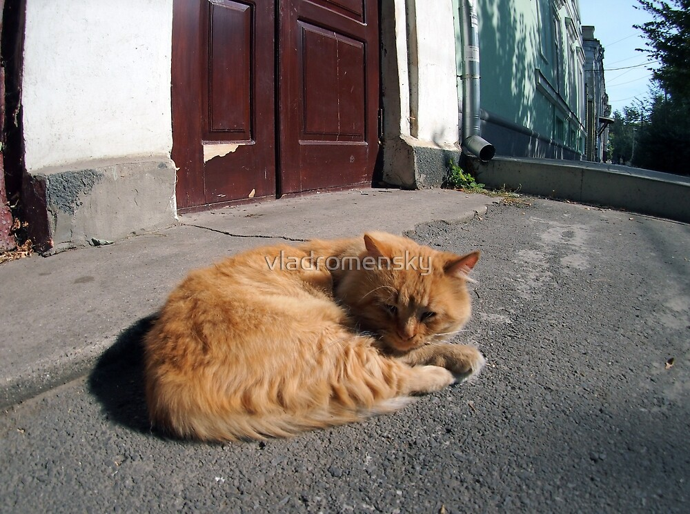 Perspective distortion view on the lonely and homeless cat by vladromensky