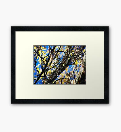 Bird Collection 002 Framed Print