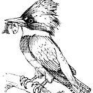 Kingfisher by tapiona