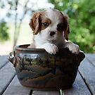 Potted Puppy (5) by Tanya Rossi
