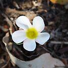 Grave flower by Megan Warren