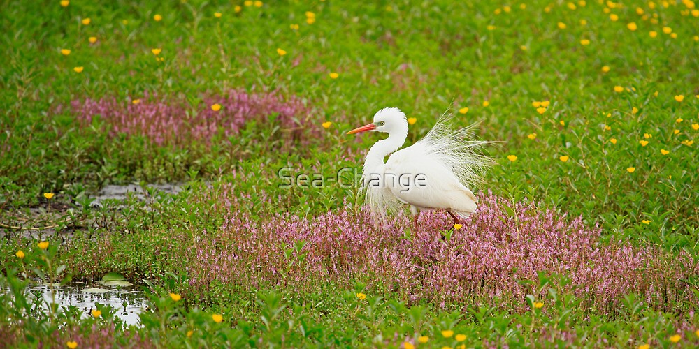 Egret by Sea-Change