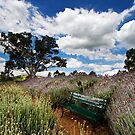 Lavender Gardens by KathyT
