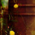 Yellow flower by Silvia Ganora