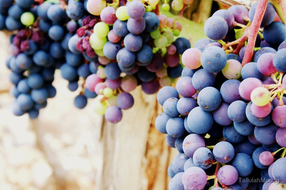 Grapes by TallulahMoody