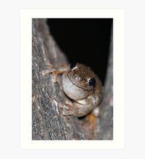 Perons Tree Frog Art Print