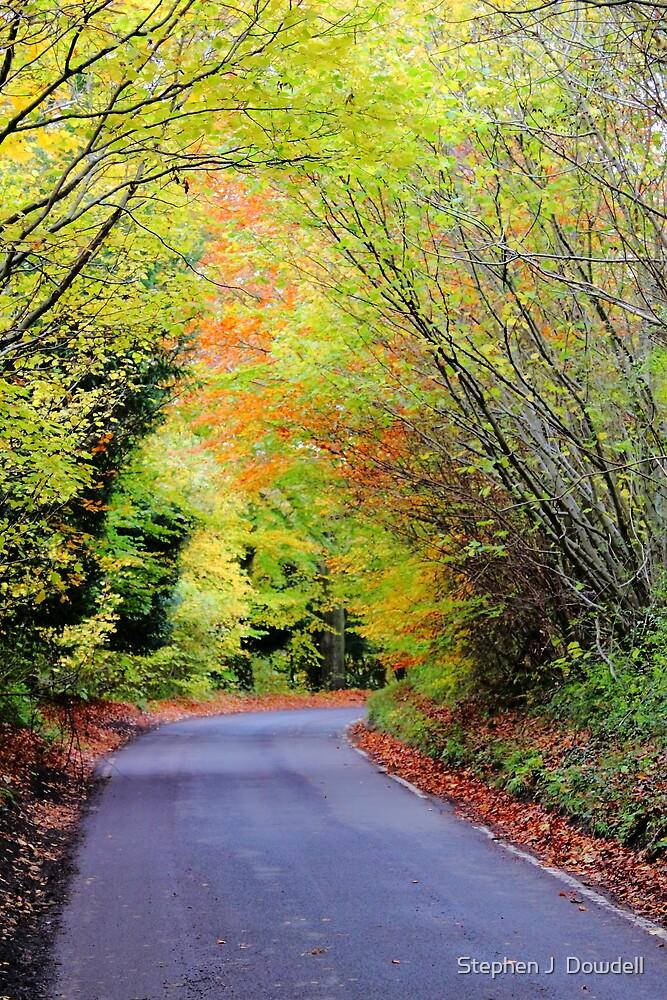 Autumnal impression by Stephen J  Dowdell