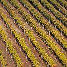 Autumn Vineyard by Davide Ferrari