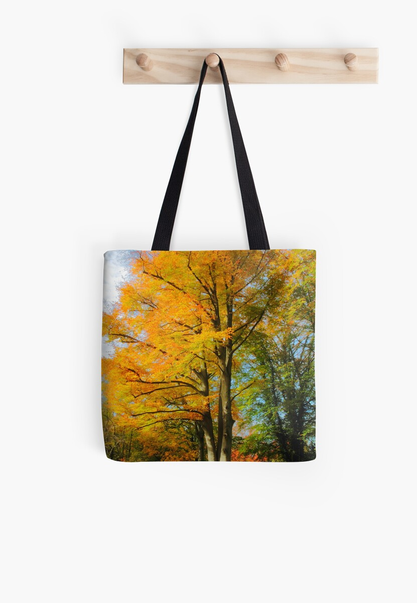 Autumn beech by Stephen J  Dowdell