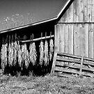 Tobacco Barn by Jane Best