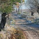 First frost in rural pathway by Antanas