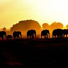African Elephants at Sunset by mrsjaques