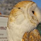 Barn Owl In Profle by Susan Dailey