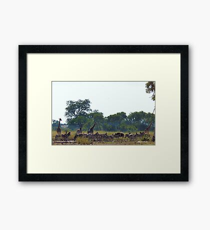 EARLY MORNING WATERHOLE GATHERING Framed Print