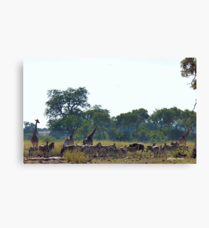 EARLY MORNING WATERHOLE GATHERING Canvas Print
