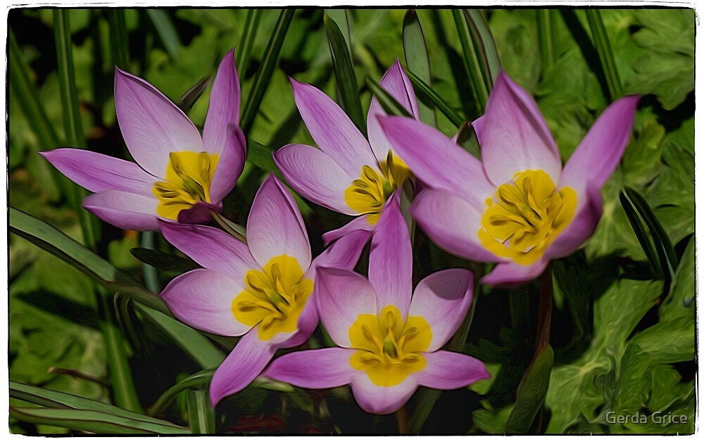 Early Spring Blooms: Pasque Flowers by Gerda Grice