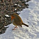 Really Cheeky Chappie by Susan Dailey