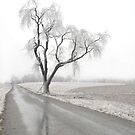 Ice Covered Tree by Glennis  Siverson