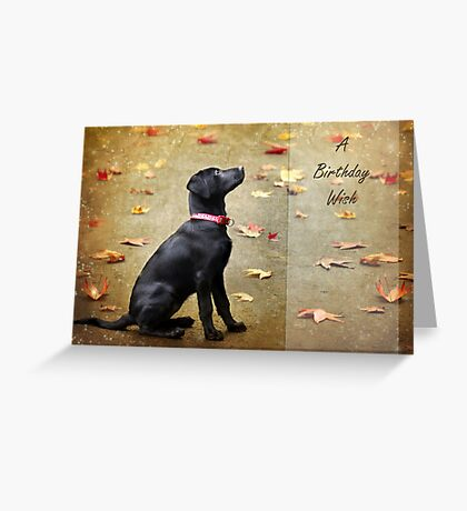 Sit Greeting Card
