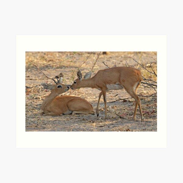 An antelope moment Art Print